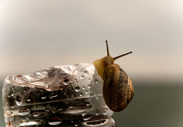 snail-water-bottle_1139-320
